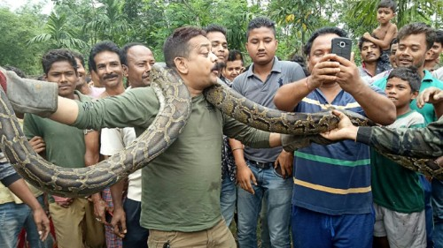 Forest ranger Sanjay Dutta wrapped the 40-kilogramme python