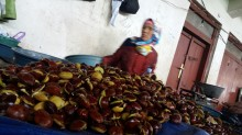 Harga Jengkol Libas Daging Ayam