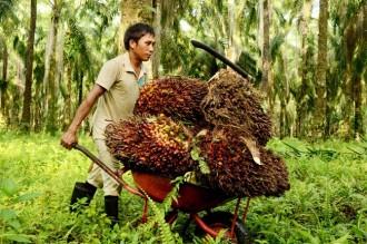 Ekspor CPO Indonesia Terganggu Larangan Uni Eropa