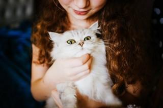 Manfaat Memelihara Kucing bagi Kesehatan Mental Anda