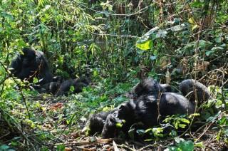 DR Kongo Setujui Pengeboran Minyak di Situs Warisan Dunia