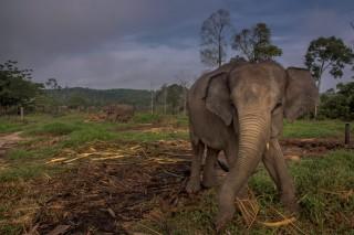 Kapolda Lampung Minta Warga tak Ganggu Habitat Gajah