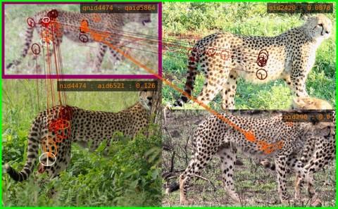 Teknologi identifikasi kecerdasan buatan Wildbook untuk