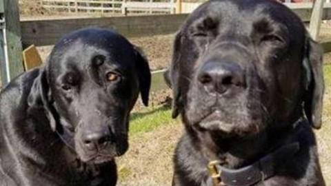 Dua anjing yang membuat masalah majikannya (Foto: Inside