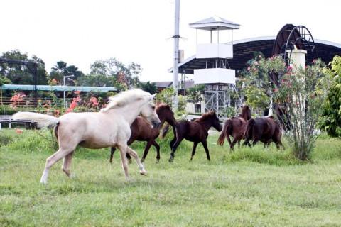 35 Masjid Dekat Venue Equestrian Dilarang Potong Kurban