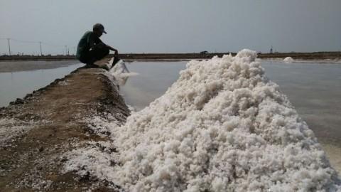 Baru Panen, Harga Garam di Cirebon Merosot