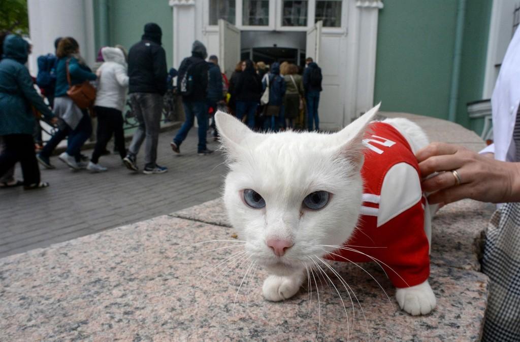 Achilles, kucing tuli namun pandai meramal. (Foto: AFP)