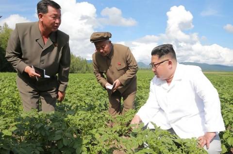 Kim Jong-un mendatangi sebuah pertanian kentang dan mengabaikan