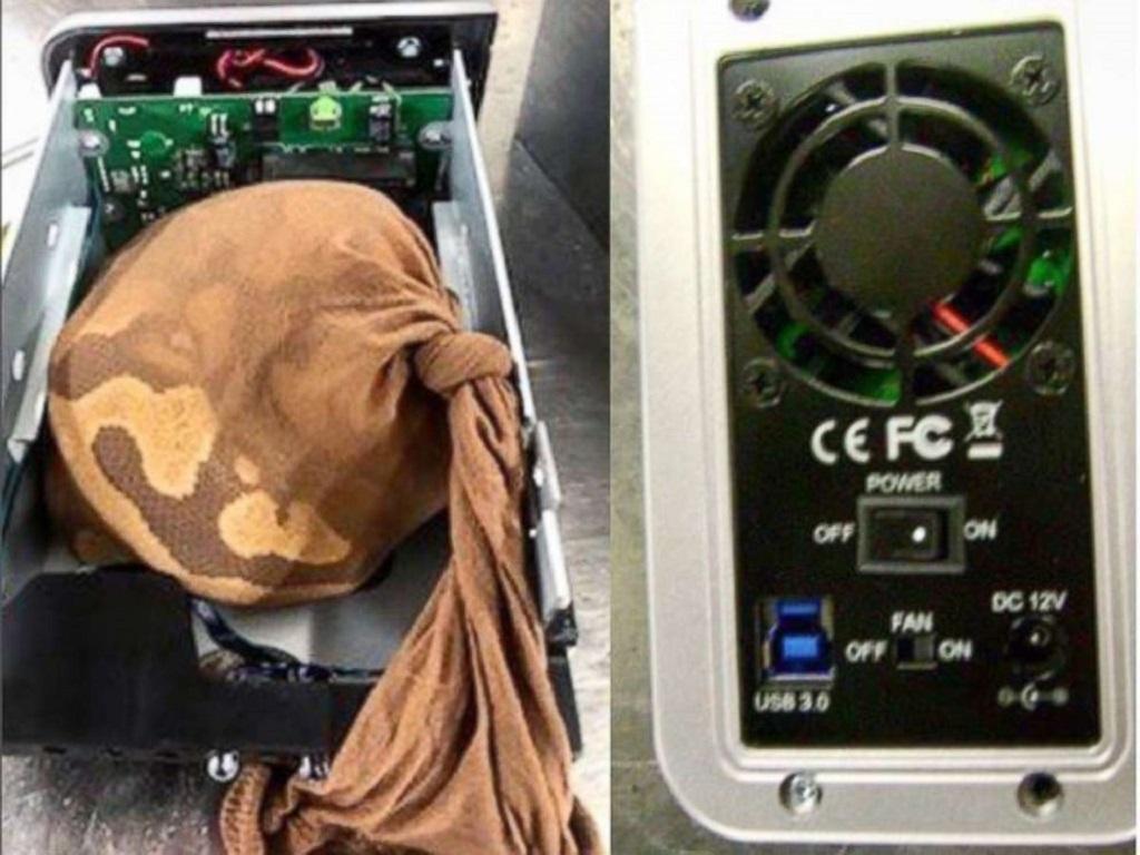 Stocking berisi ular piton yang disembunyikan di dalam perangkat network attached storage. (ABC News)
