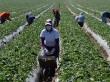 Ketegangan Perdagangan AS-Tiongkok Picu Kekhawatiran Petani Amerika