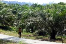 Petani Sawit Tunggu Investor untuk Pengolahan Sawit