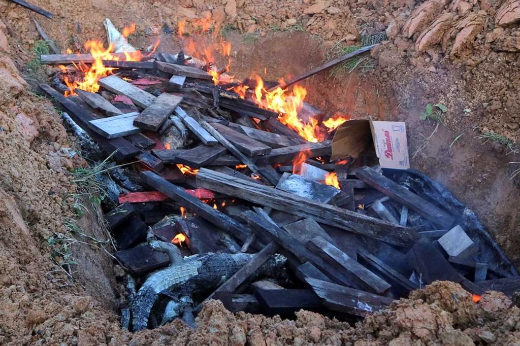 Ratusan Buaya yang Dibantai Warga Dikubur