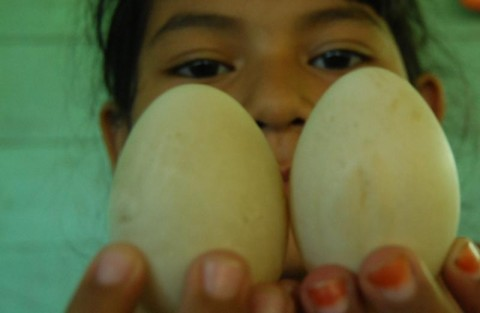Harga Telur Naik, Mendag: Pelaku Usaha Jangan Ambil Untung!
