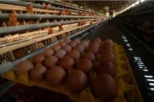 Harga Telur di Pasar Anyar Tangerang Rp30 Ribu per Kg