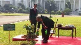Jokowi, Micronesian Leader Plant Tree at Bogor Palace