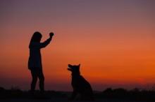 Penelitian: Terapi Anjing Efektif Tingkatkan Konsentrasi pada