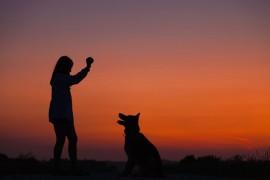 Penelitian: Terapi Anjing Efektif Tingkatkan Konsentrasi pada Penderita ADHD