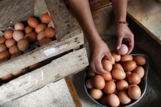 Harga Telur Ayam di Padang Tembus Rp47 Ribu per Rak