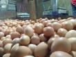 Kelangkaan Pakan Disebut Pemicu Kenaikan Harga Telur