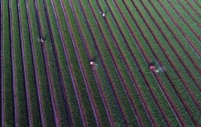 Pengamat: Pasar Pertanian Masih Dikuasai Kartel Impor