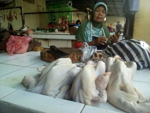 Pedagang Ayam Broiler di Sleman Memilih Libur