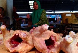 Harga Pakan Memicu Kenaikan Harga Daging Ayam