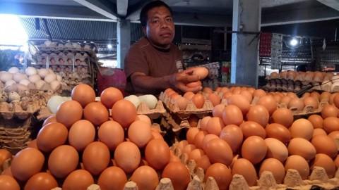 Legislator Minta Penyelarasan Data Ayam dan Telur