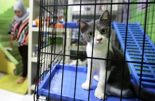 Seekor kucing dititip di petshop saat pemiliknya mudik lebaran.