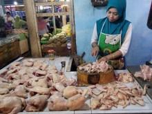 Harga Daging Ayam di Jember Capai Rp42 Ribu/Kg