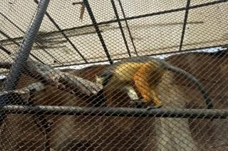 Kesehatan Monyet Korban Semburan Uap Vape Membaik