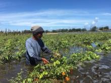 Alat Berat Diterjunkan Atasi Rob di Lahan Pertanian Bantul