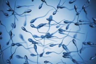 Celana Ketat Berpotensi Turunkan Jumlah Sperma