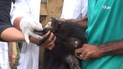 Dinas Kesehatan Medan Intensifkan Pemeriksaan Hewan Kurban