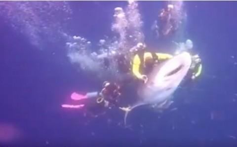 Kontak Fisik Mengancam Kelangsungan Hidup Satwa Laut