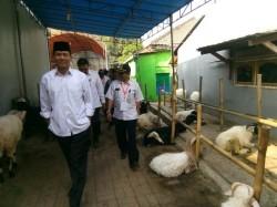 Pemkab Tangerang Minta Masyarakat Beli Hewan Kurban Berlabel