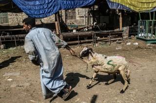 Mesir Larang Penyembelihan Hewan Kurban di Pinggir Jalan