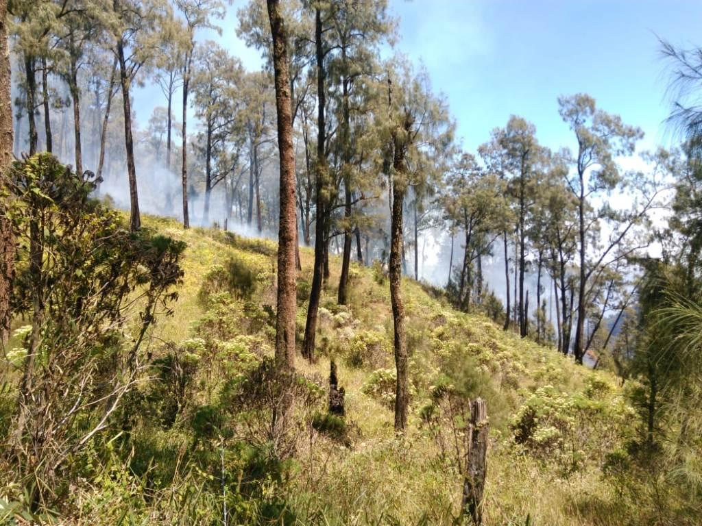 Kebakaran hutan di kawasan Gunung Panderman dan Gunung Butak, Kota Batu, Jawa Timur, Sabtu 18 Agustus 2018. (Dok. Istimewa)