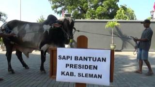Hewan Kurban Presiden Dipastikan Tersalur untuk Masyarakat Miskin