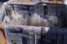 Polisi Gagalkan Upaya Penyelundupan Ratusan Ribu Bibit Lobster