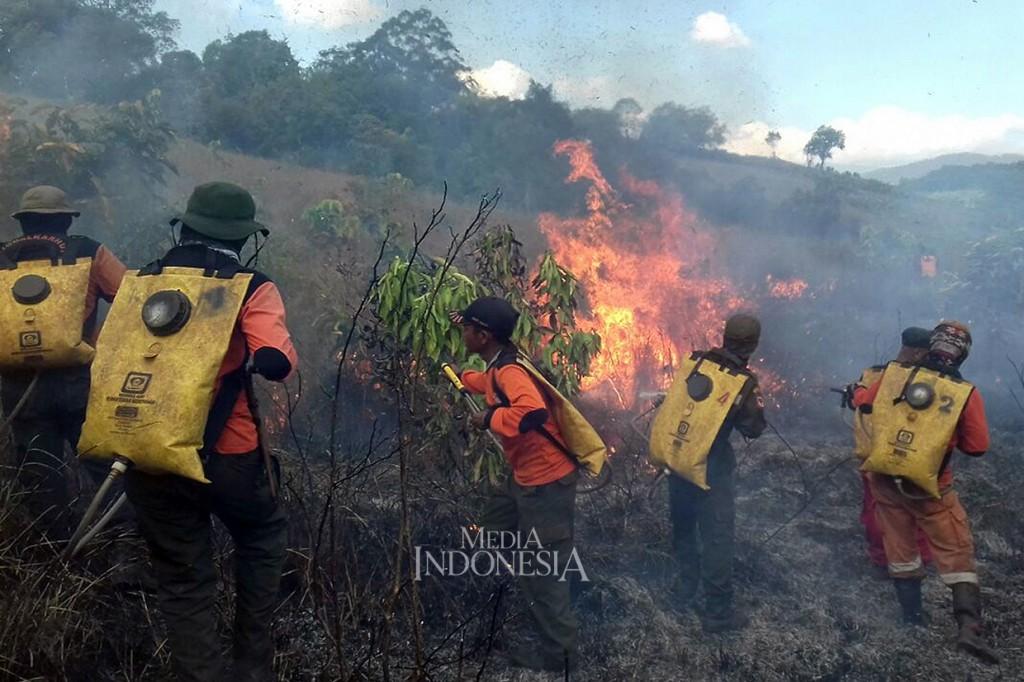 Ribuan Hektare Lahan di Kalimantan Selatan Terbakar