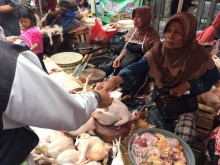 Harga Ayam Kampung Melejit