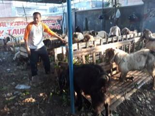 Pedagang Hewan Kurban di Malang Beri Diskon Besar untuk Hafiz