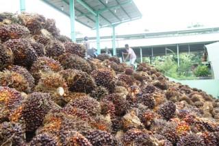 Penurunan Ekspor Malaysia Secara Global Tekan Harga CPO