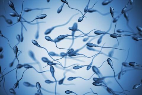 Kurang Protein Memperburuk Kualitas Sperma