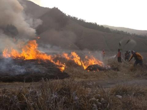 Warga Diduga Jadi Dalang Kebakaran Kawasan Gunung Bromo