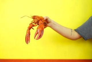 Tips Membuka Cangkang Hewan Laut