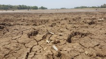 Air Setu Sedong Cirebon Menyusut Drastis Akibat Kemarau