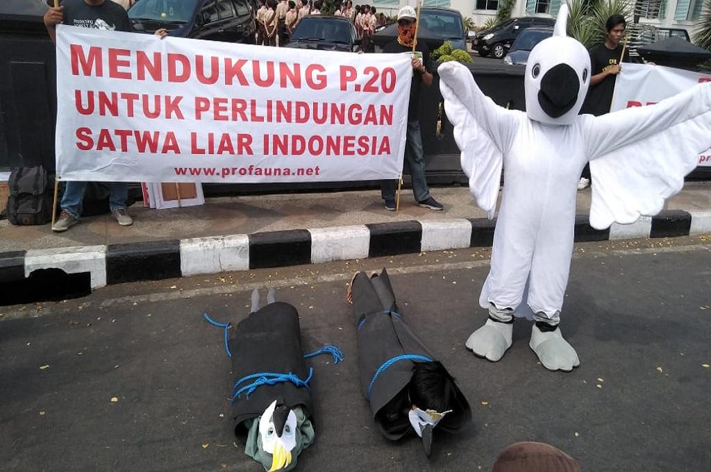 Aksi organisasi perlindungan hutan dan satwa liar terkait perlindungan terhadap kakatua dan nuri di Malang, Medcom.id - Daviq