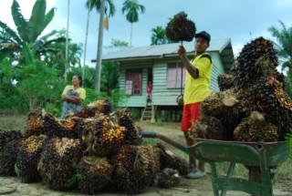 Harga Minyak Sawit Malaysia Tertekan Perang Dagang AS-Tiongkok