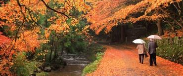 Negara Terbaik untuk Dikunjungi saat Musim Gugur
